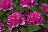 Bloom, Blossom, Close_Up, Day, Environment