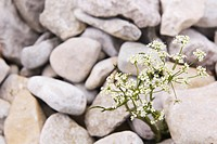 Close_Up, Heap, Hard, Flower, Abundance
