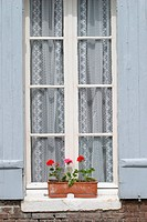 Blooms, Blossoms, Building, Curtains, Day, Developed (thumbnail)