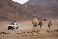 Barren, Casual Clothing, Car, Camel, Arid Climate