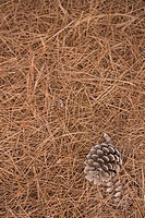Brown, Close_Up, Cone, Dry, Haystack