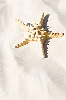 Starfish on sand (thumbnail)