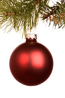 Still life of round red Christmas ornament hanging from pine branch