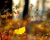 Season, plant, leaf, branch, tree, fall, nature (thumbnail)