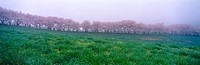 tree, landscape, spring, season, scenery, fog, nature