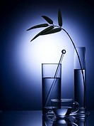 kitchen item, vase, cup, glass cup, leaf, glass vase