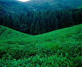scenery, plant, tree, mountain, film