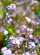 Flower, season, plant, nature, spring, film (thumbnail)