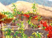 tree, nature, spring, season, plant, film