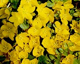 Flowers, nature, flower, closeup, scene, yellow flower, landscape (thumbnail)