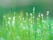 plant, waterdrop, natural phenomenon, grass, film