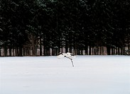 Forest, bird, winter, snow, nature, landscape, animal (thumbnail)