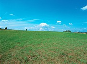 grass, scenic, plain, grassland, tree, natural world