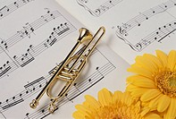 Gerbera And The Accessories Of A Trumpet And A Score