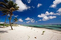 Palm trees on the beach, Grand Cayman, Cayman Islands