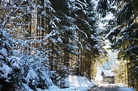 Snow covered fir trees leading to a cabin in flachau,