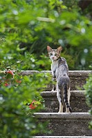 Italy, Tuscany, Cat on steps