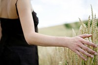 Hand, woman, touch, grains, corn field, nature, on (thumbnail)