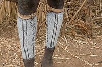 Coloured legs from a Dasanech tribal man Omovalley Ethiopia Africa