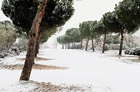Snow-covered park. Madrid, Spain