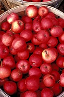 Close_up of Harvested Red Apples in a Wooden Basket