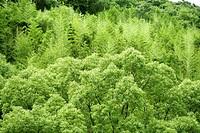 Forest, Bush