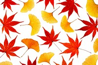 Assorted autumn leaves on white background, close_up