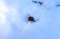 Close_up of single pine cone and bare twig in snow, horizontal