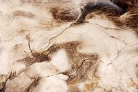 Animal_like marble surface
