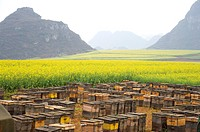 China, Yunnan Province, Luoping County, Beehives