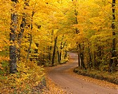 Herbstwald _ Michigan