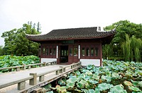 Lotus Stirred by Breeze in Quyuan Garden in West Lake, Hangzhou, Zhejiang Province