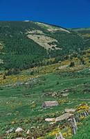 Eine Steinhütte in Mont Lozere, Frankreich, Languedoc_Roussillon _ Barn in Mont Lozere, France, Languedoc_Roussillon