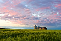 Sunset over farmbuildings and wheat swaying gently in the evening breeze, Gilbert Plains, Manitoba, Canada