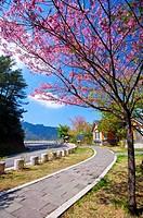 Asia, China, Taiwan, Chiayi, Alishan National Scenic Area