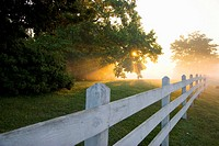 sun pierces through trees and an early morning fog to illuminate a white fence