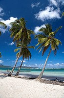 Dominican Republic _ North Coast _ Samana Peninsula _ Las Galeras