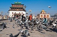 Flock of pigeons on street, Ulan Bator, Independent Mongolia