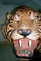 Sculpture of snarling tiger