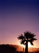 Palm tree in silhouette at sunset