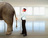 Blindfolded Asian businessman holding elephant´s tail