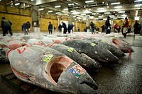 Graded tuna at a market
