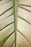 Close up pattern on a leaf