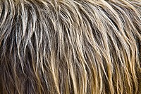 Close up image of animal fur