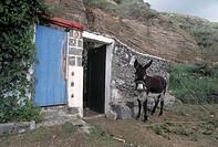 Donkey, São Miguel, Azores, Portugal
