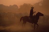 vaqueiro Mato Grosso do Sul South America