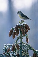 Bird perched on plant close_up
