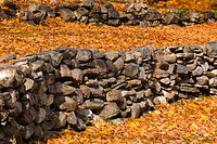 Autumn leaves on a retaining wall