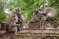 Bali, Indonesia, Monkeys