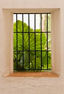 Alcázar of Seville, Seville Province, Spain, Huge green leaf seen through barred window